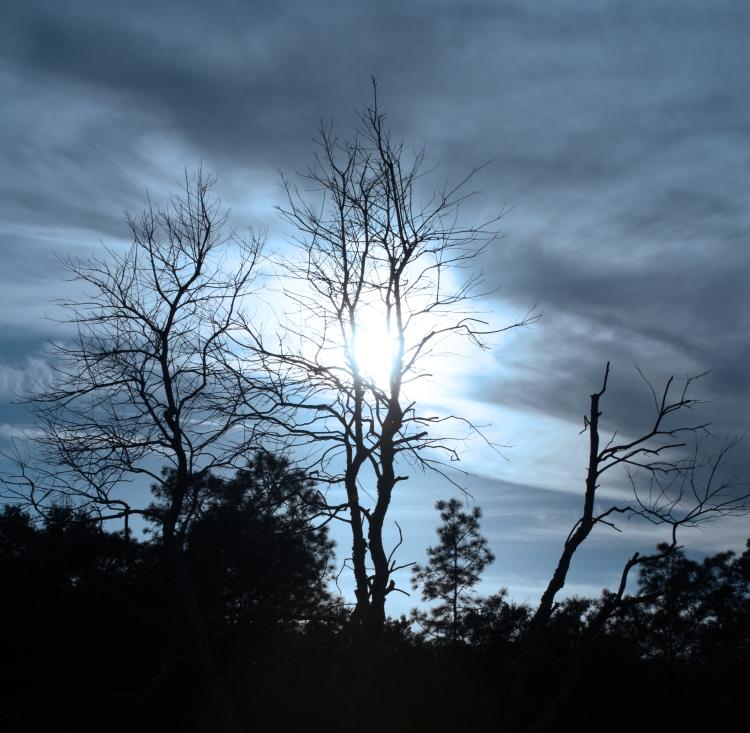 Wicked Blue Sky